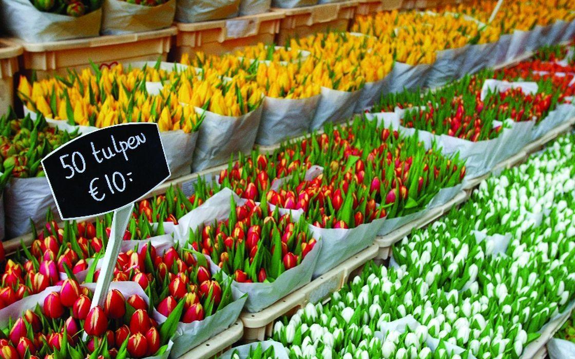 Floating Flower Market.Visit The Floating Flower Market In Amsterdam Holland Com
