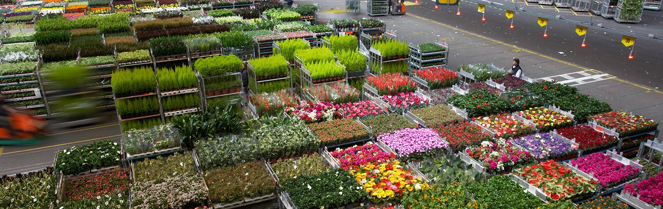 Royal FloraHolland, Naaldwijk