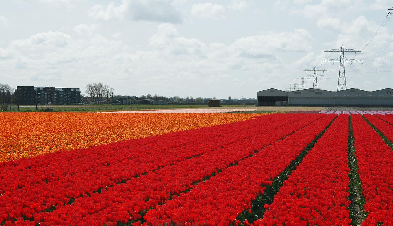 Best Running Trails in North Holland Netherlands | AllTrails