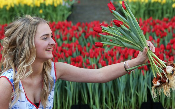 Lady with tulips at an tulip event in Amsterdam
