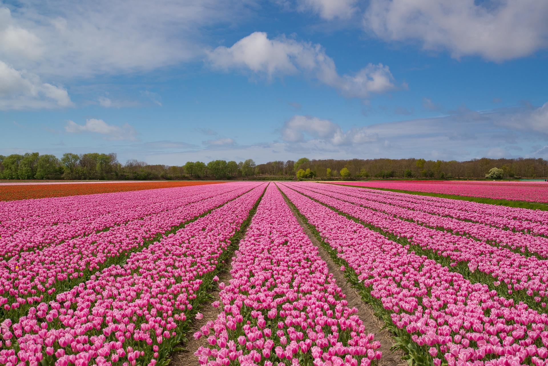 Feiertage In Holland 2020