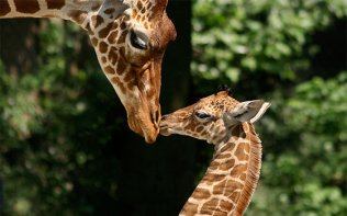 Visit a zoo and see the new borns