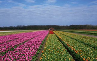 Haarlem and the Flower Bulb Region