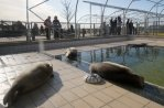 Seal Rehabilitation Centre Lenie 't Hart