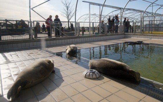 Seals at the Seal Rehabilitation and Research Centre Lenie 't Hart
