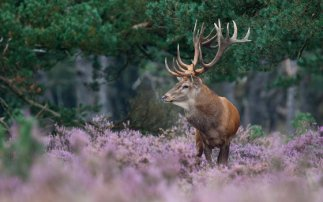 Nationalpark Hoge Veluwe