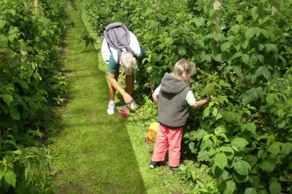 "Pick yout own fruit at the ""zelfpluktuin"""