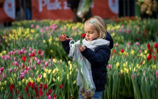 National Tulip Day