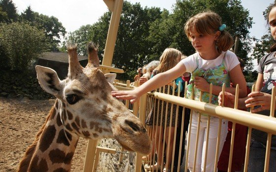 Girl and giraffe at Burgers Zoo