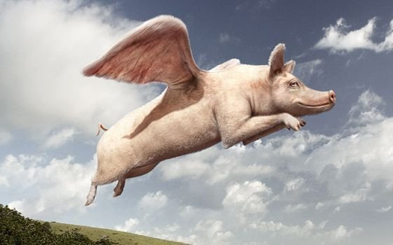 http://www.holland.com/upload_mm/5/3/e/22758_fullimage_flying_pig_560x350.jpg
