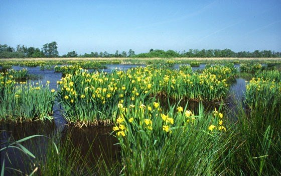 The Alde Feanen, Friesland