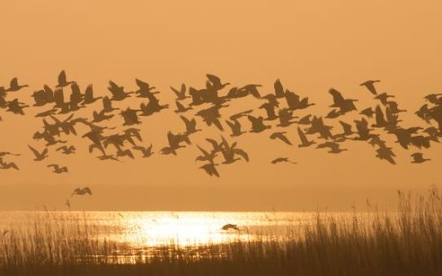 Le Parc national Lauwersmeer