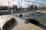 Pieterburen Seal Sanctuary