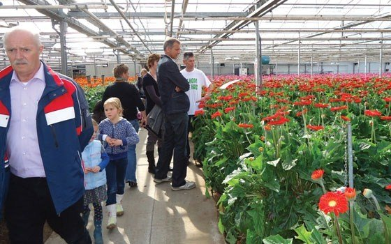 In Holland, flowers are grown in heated greenhouses
