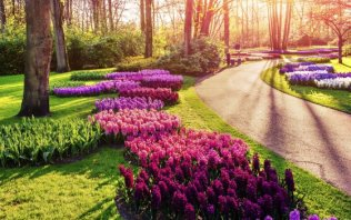 Keukenhof - Buy your tickets!