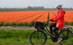 Seven reasons to explore Holland by bicycle