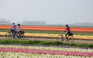 Ride your bicycle to Keukenhof