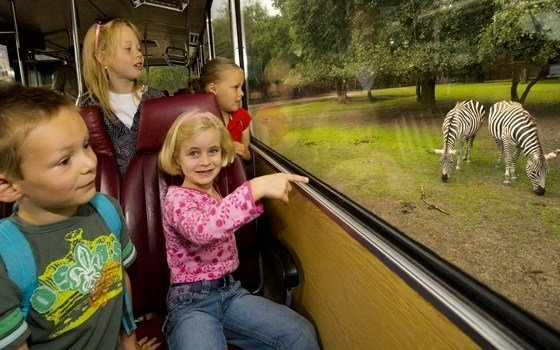 Children in a safari bus at Safaripark Beekse Bergen (Zoo)