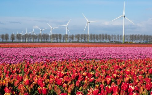 Flowers in Flevoland