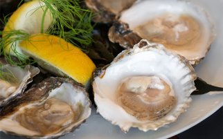 Taste the season: Zeeland oysters