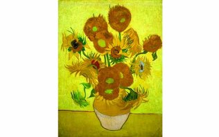 Van Gogh's five Sunflowers on display together