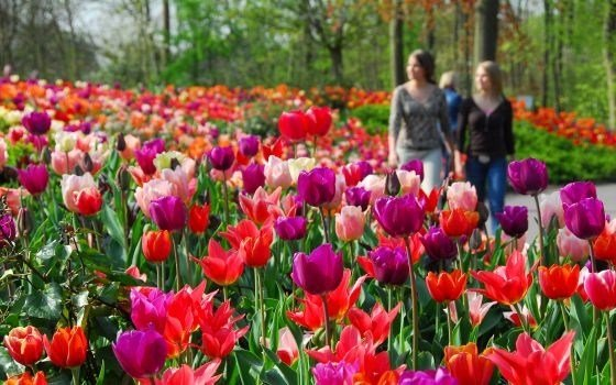 Keukenhof Flower Fields
