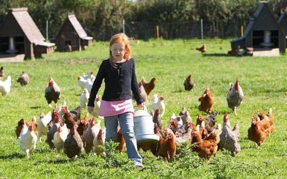 A girl with Chickens