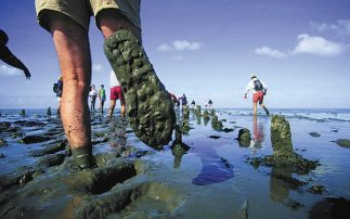 Wadlopen in Friesland