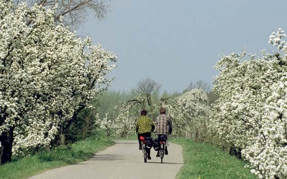 People cycling through the Betuwe