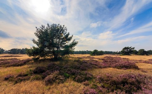 Il Parco Nazionale Hoge Veluwe