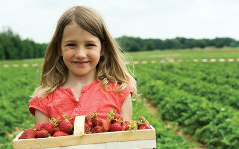 Taste the season: Dutch strawberries