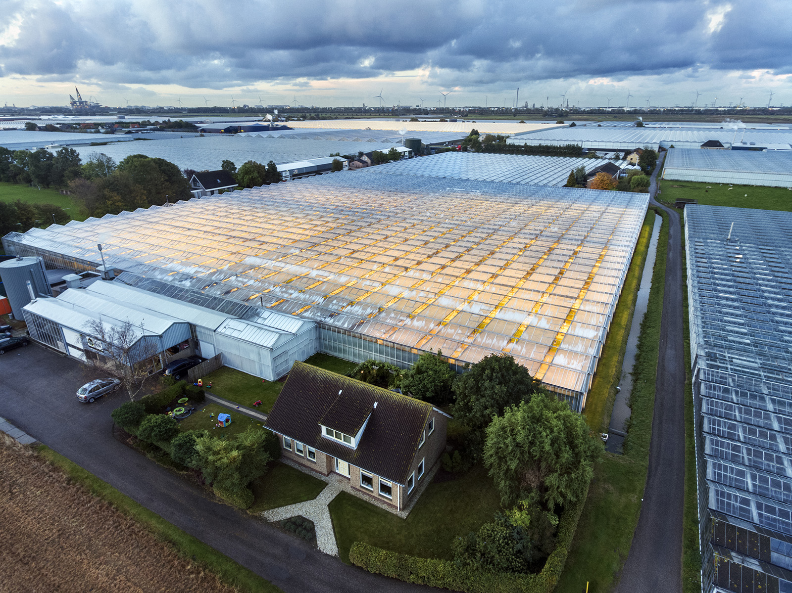 Greenhouses in Westland