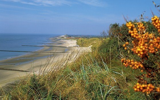 the beach and berrys