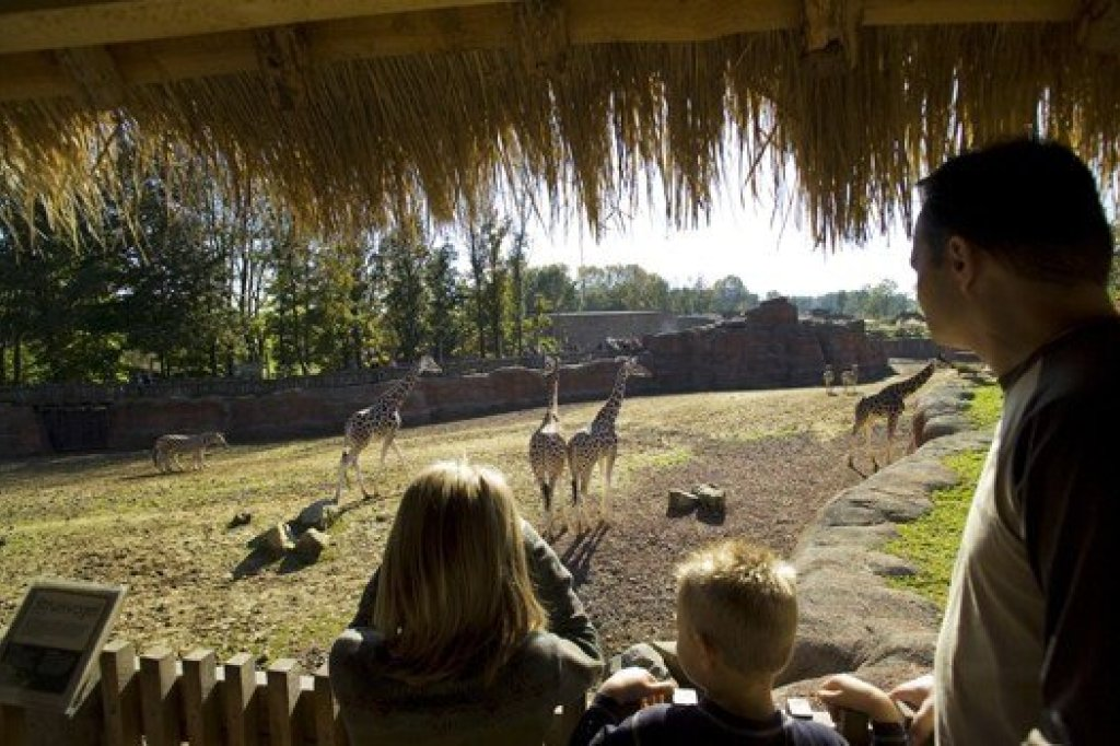 Family watching animals at GaiaPark Kerkrade Zoo