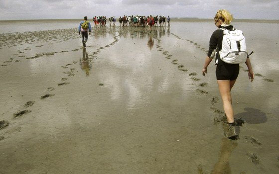 Group of people hiking in the wadden
